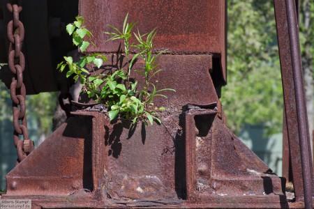 Industrie und Natur vereint...